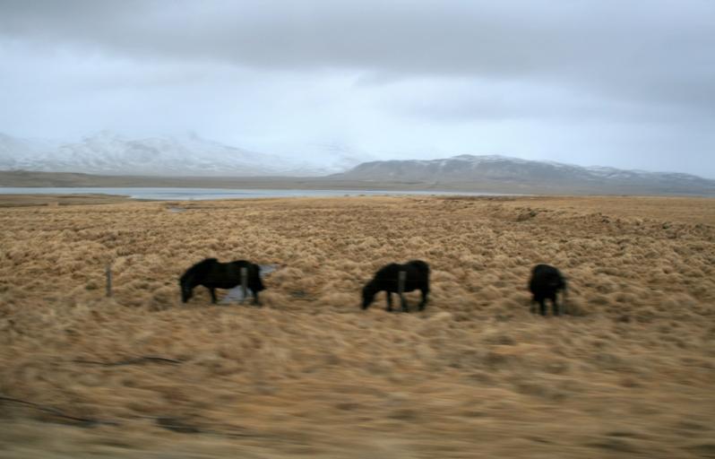Iceland-97