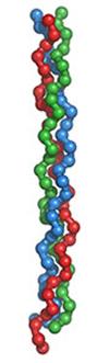 Molécula de colágeno